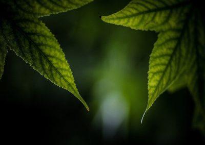 leaves-dark-lo