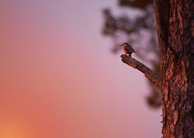 Bird_Tree