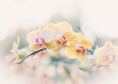 orchid_LR